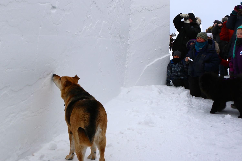 Snowking festival begins