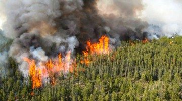 Wildfire ZF002 image, uploaded on June 10, 2015