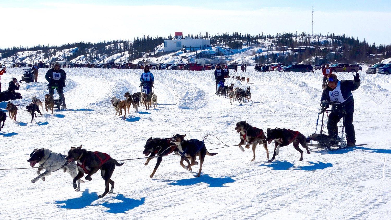 Canadian Championship dog derby