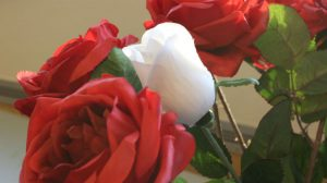 Roses used to commemorate the victims of the Montreal Massacre.